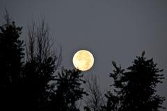 Luna estupenda que fija 8-11-14 Fotografía de archivo