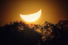 Luna fijada sobre los árboles imagenes de archivo