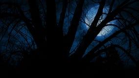 Luna grande detrás de ramas de árbol torcidas almacen de metraje de vídeo