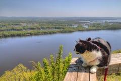 Luna la aventura Kitty es un explorador felino que viaja el cercano oeste y más allá de buscar nuevas cosas para ver y nuevos lug imágenes de archivo libres de regalías