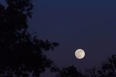 Resultado de imagen de Imágenes de luna llena entre árboles