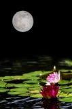 Luna Llena de los lirios de agua Imagenes de archivo