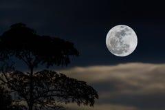 Luna Llena en cielo Imagenes de archivo