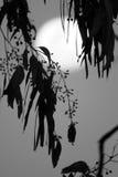 Luna Llena en el fondo Imagen de archivo libre de regalías