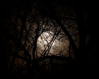 Luna Llena fijada contra árboles en la noche. Fotografía de archivo