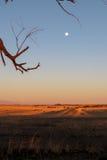 Luna Llena sobre campo con puesta del sol del árbol Imagen de archivo