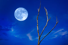 Luna Llena y árbol Fotos de archivo libres de regalías
