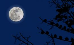 Luna Llena y cielo azul Imagen de archivo libre de regalías