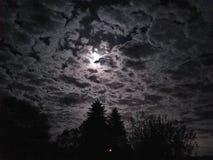 Luna luminosa con gli alberi scuri Immagine Stock