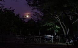 Luna luminosa nello scuro Immagine Stock