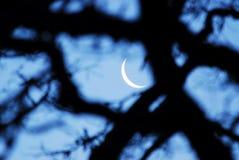 Luna a mezzaluna Fotografia Stock