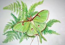 Luna Moth Art com espaço da cópia imagens de stock royalty free