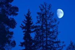Luna negli alberi Fotografie Stock Libere da Diritti