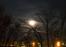 Luna negli alberi Fotografia Stock Libera da Diritti