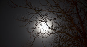 Luna piena alla notte Fotografia Stock