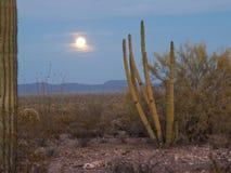 Luna piena aumentante nel deserto Fotografia Stock