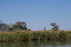 Luna piena che splende sopra le piante del papiro Fotografie Stock Libere da Diritti
