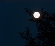 Luna piena d'ardore 2 Immagini Stock
