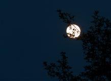 Luna piena d'ardore 1 Immagini Stock