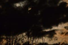 Luna piena dietro i cieli notturni dorati e gli alberi spettrali Fotografia Stock