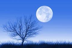 Luna piena ed albero solo Fotografia Stock Libera da Diritti