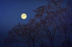 Luna piena sopra gli alberi nella stagione di caduta Fotografia Stock Libera da Diritti