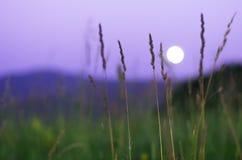 Luna piena vaga che aumenta sopra le montagne di Altai, il Kazakistan, visto attraverso erba verde alta sulla notte di estate Fotografie Stock