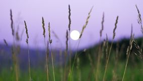 Luna piena vaga che aumenta sopra le montagne di Altai, il Kazakistan, visto attraverso erba verde alta sulla notte di estate Fotografia Stock Libera da Diritti