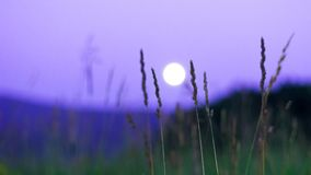 Luna piena vaga che aumenta sopra le montagne di Altai, il Kazakistan, visto attraverso erba verde alta sulla notte di estate Fotografia Stock