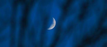 Luna quarta attraverso gli alberi Fotografia Stock