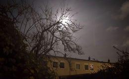 Luna que brilla a través de un árbol Imagen de archivo libre de regalías