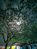 Luna que oculta detrás del árbol imágenes de archivo libres de regalías