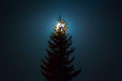 Luna sobre árbol de abeto Imagen de archivo libre de regalías