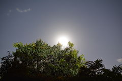 Luna sobre árboles Fotos de archivo libres de regalías