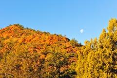 Luna sobre árboles del otoño Imagenes de archivo