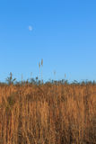 Luna sobre campo Fotos de archivo libres de regalías