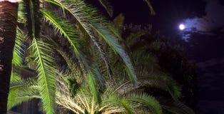 Luna sobre las palmas Fotografía de archivo libre de regalías
