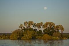 Luna sobre las palmas, río de Zambezi Foto de archivo libre de regalías