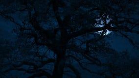 Luna spaventosa dietro l'albero sulla notte tempestosa archivi video