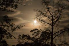 Luna a través de los árboles Imágenes de archivo libres de regalías