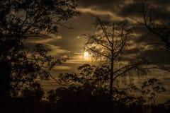Luna a través de los árboles Foto de archivo libre de regalías