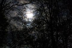 Luna a través de los árboles Imagenes de archivo