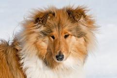 Luna in wintertime Stock Photos
