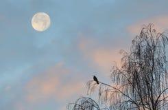 Luna y pájaro Imagen de archivo libre de regalías