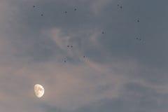 Luna y pájaros Foto de archivo