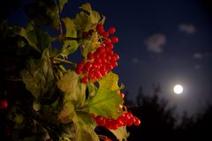 Lunar berries Stock Photo