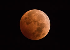 Lunar Eclipse Blood Moon. The full lunar eclipse on October, 8, 2014 Stock Images