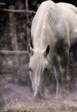 Lunar horse. The white horse drinks a night fog, a photo with drawing Stock Photo