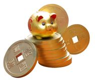 Lunar New Year Gold Pig. Golden Piggy with gold coins on White Background royalty free stock images