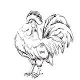 Lunar New Year greeting card design. Cock sketch. 2017 Lunar New Year greeting card design. Year 2017 vector design element . Cock sketch Stock Photos